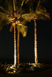 Palm Trees At Night. A small grove of palm trees illuminated by lights at night. The illumination from below gives a high level of contrast with the trees stock photos
