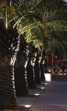Palm trees at night. French riviera palm trees at night, illuminated by street lights Royalty Free Stock Images