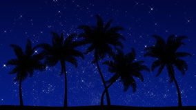 Palm Trees at Night (Animated HD Background). HD animation of stylized palm tree silhouettes stock video