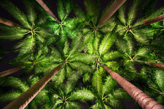 Palm trees at night Stock Image