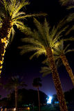 Palm trees at night in Eilat, Israel Stock Photography