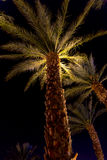 Palm trees at night in Eilat, Israel Royalty Free Stock Images