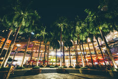 Palm trees at night, at Greenbelt Park, in Makati, Metro Manila,. The Philippines Stock Photos