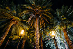 Palm trees at night at Harbour Square, in Pasay, Metro Manila, T Royalty Free Stock Photo