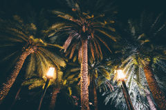 Palm trees at night at Harbour Square, in Pasay, Metro Manila, T. He Philippines royalty free stock image