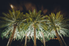 Palm trees at night at Harbour Square, in Pasay, Metro Manila, T Stock Images