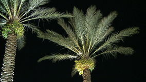 Palm trees night left stock footage