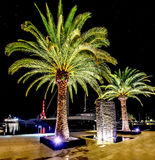 Palm trees in the night lights in Marina Porto Montenegro, Tivat Stock Photos