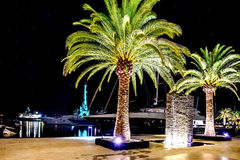 Palm trees in the night lights in Marina Porto Montenegro, Tivat. Palm trees in the night lights in Marina Porto Montenegro Royalty Free Stock Photography