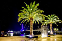 Palm trees in the night lights in Marina Porto Montenegro, Tivat Royalty Free Stock Images