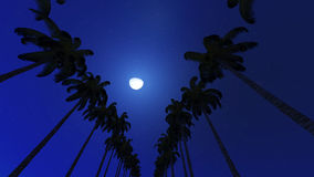 Palm trees in night Stock Photo