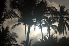 Palm trees at night. Palm trees, nature background at night Stock Image