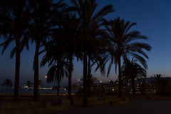 Palm trees at night in Palma de Mallorca. Palm trees in Palma de Mallorca in the city center, near the Cathedral. Palma de Mallorca is the major city and capital Stock Photos