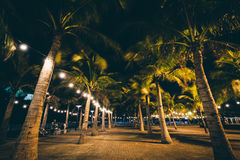 Palm trees at night, in Pasay, Metro Manila, The Philippines. royalty free stock photo