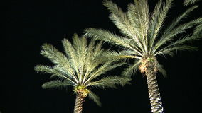 Palm trees night right stock video footage