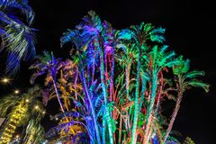 Palm trees at night, vividly lit with colored lights stock photos
