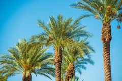 Palm Trees Oasis Royalty Free Stock Photography
