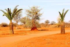 Palm trees oasis red Kalahari desert, Namibia. Palm trees and red sand in an oasis of the kalahari desert, Namibia, Africa Stock Photo