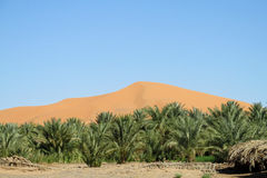 Palm trees oasis in sand dunes Royalty Free Stock Image