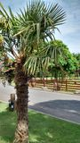 Palm Trees. In Oban Royalty Free Stock Photos
