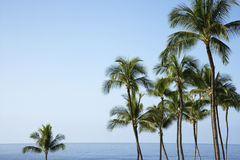 Palm trees and Ocean. Palm trees with the ocean horizon in the distance. The sky is clear and blue. Horizontal shot Royalty Free Stock Photo