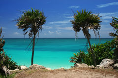 Palm Trees by Ocean Stock Photography