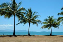 Palm trees by the ocean Stock Images