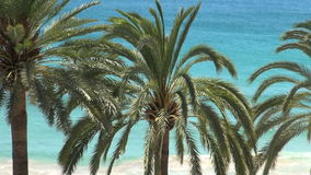Palm trees with ocean background stock video