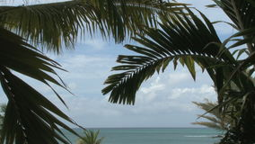 Palm trees with ocean background stock footage