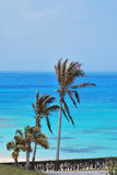 Palm trees on ocean beach. Crystal clear blue water beach with palm trees Stock Images