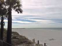 Palm trees on Florida beach Royalty Free Stock Photo