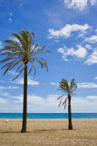 Palm Trees on Ocean Beach on Sunny Summer Day Royalty Free Stock Image