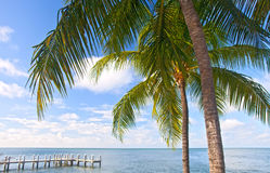 Palm trees, ocean and blue sky on a tropical beach in Florida keys Royalty Free Stock Photos