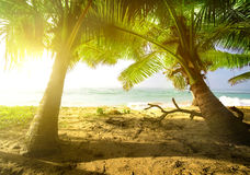 Palm trees and ocean Stock Images
