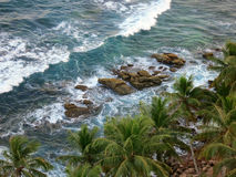 Palm trees at the ocean coast, top view. Sri-Lanka Royalty Free Stock Images