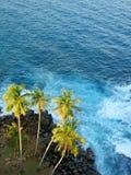 Palm trees at the ocean coast, top view. Sri-Lanka Stock Photography