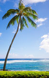 Palm trees by the ocean. Coconut Palm tree by the ocean in Hawaii, Kauai Stock Image