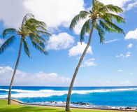 Palm trees by the ocean Royalty Free Stock Photo
