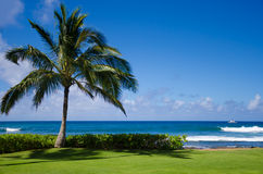 Palm trees by the ocean. Coconut Palm tree by the ocean in Hawaii, Kauai Royalty Free Stock Image