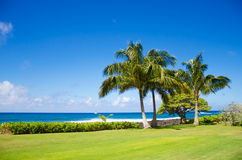 Palm trees by the ocean. Coconut Palm tree by the ocean in Hawaii, Kauai Stock Photo