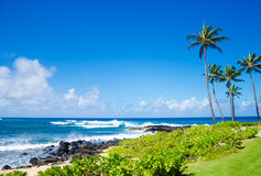 Palm trees by the ocean. Coconut Palm tree by the ocean in Hawaii, Kauai Royalty Free Stock Photos