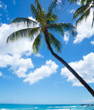 Palm trees by the ocean. Coconut Palm tree by the ocean in Hawaii, Kauai Stock Photography