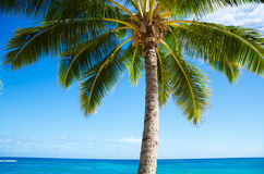 Palm trees by the ocean Stock Image