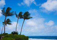 Palm trees by the ocean Stock Photography