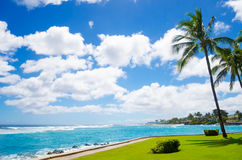 Palm trees by the ocean Royalty Free Stock Photography