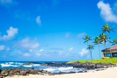 Palm trees by the ocean. Coconut Palm tree by the ocean in Hawaii, Kauai Royalty Free Stock Photo