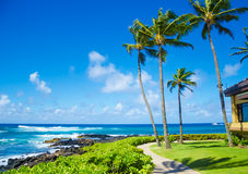 Palm trees by the ocean. Coconut Palm tree by the ocean in Hawaii, Kauai Royalty Free Stock Photography