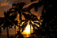 Palm trees at the ocean in Hawaii Royalty Free Stock Photography
