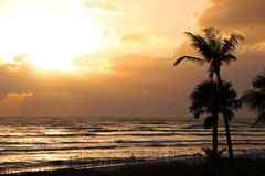 Palm trees and ocean sunset Royalty Free Stock Images