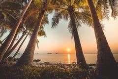 Palm trees, ocean. Sunset landscape, Bali. stock photo